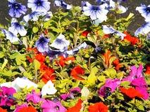 Flores de sino do grupo de cores diferentes Fotos de Stock Royalty Free