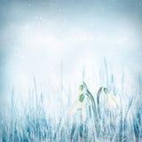 Flores de Snowdrop Fotos de Stock Royalty Free