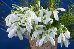 Flores de Snowdrop Fotografía de archivo libre de regalías