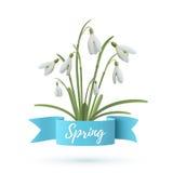 Flores de Snowdrop con la cinta azul Fotografía de archivo libre de regalías
