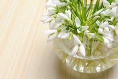 Flores de Snowdrop en un florero fotografía de archivo libre de regalías