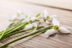 Flores de Snowdrops Foto de Stock