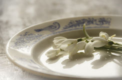 Flores de Snowdrops na placa Fotos de Stock