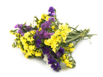 Flores de Statice - Limonium Sinuatum Fotografia de Stock
