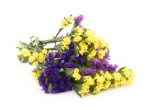 Flores de Statice - Limonium Sinuatum Imagem de Stock Royalty Free