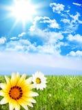 Flores de Sun Fotografia de Stock