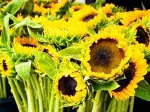 Flores de Sun Natureza, mercado Sun fresco fotos de stock royalty free