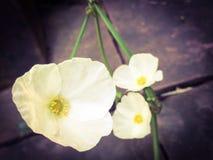 Flores de Tejas de un bebé del fango Fotos de archivo libres de regalías