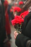 flores de terciopelo en las manos humanas Foto de archivo libre de regalías