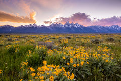 Flores de Tetons magnífico imagenes de archivo