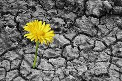 Flores de tierra secados Imágenes de archivo libres de regalías