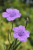 Flores de Toiting Imagens de Stock