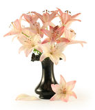 Flores de um lírio cor-de-rosa Foto de Stock Royalty Free