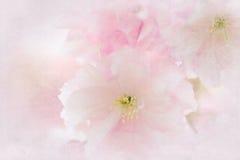 Flores de una cereza japonesa Imagenes de archivo