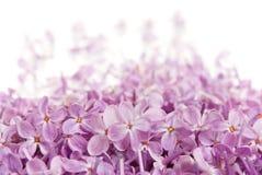 Flores de una lila imagen de archivo