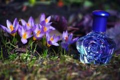 Flores de vidro do açafrão da mola da garrafa de perfume Fotografia de Stock Royalty Free