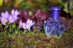 Flores de vidro do açafrão da mola da garrafa de perfume Foto de Stock Royalty Free