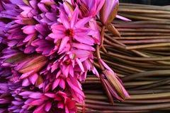 Flores de Waterlily Fotografia de Stock