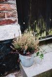 Flores de Wellcome delante del hogar danés Foto de archivo
