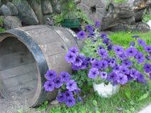 Flores de Widow's foto de stock