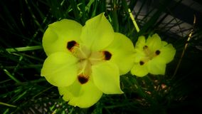 Flores de Yelow Imagen de archivo