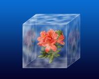 Flores debajo del vidrio Fotografía de archivo libre de regalías