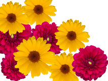 Flores, decorativas Imagem de Stock Royalty Free
