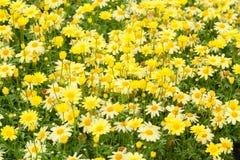 Flores decorativas amarillas Fotos de archivo libres de regalías