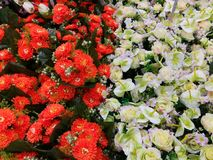 Flores decorativas anaranjadas y blancas Fotografía de archivo libre de regalías