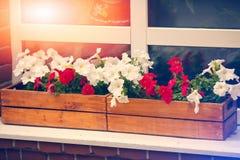 Flores decorativas da casa em uma cama de madeira Fotos de Stock