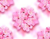 Flores decorativas de sakura, ramalhete de Cherry Blossoms com sombra seamless Pode ser usado para cartões, convites, cartazes ilustração stock