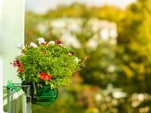 Flores decorativas del balcón en potes con la suspensión Imagenes de archivo