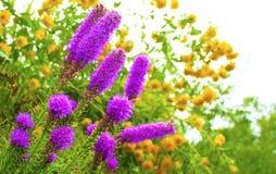 Flores decorativas del jardín. Imagenes de archivo