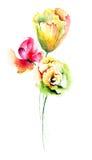 Flores decorativas del verano Foto de archivo libre de regalías