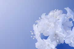 Flores decorativas do casamento imagens de stock royalty free