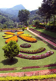 Flores decorativas no jardim Imagem de Stock