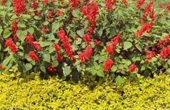 Flores decorativas no jardim Fotos de Stock
