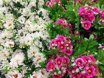 Flores decorativas rosa y blanco Imagen de archivo libre de regalías