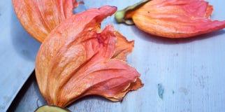 Flores deixadas cair da árvore selvagem Fotos de Stock Royalty Free