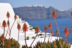 Flores del áloe Imagen de archivo libre de regalías