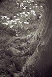 Flores del árbol Fotos de archivo libres de regalías