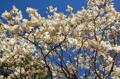 Flores del árbol fotografía de archivo