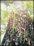 Flores del árbol imágenes de archivo libres de regalías