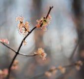 Flores 2 del árbol imagen de archivo libre de regalías
