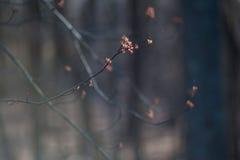 Flores 3 del árbol fotos de archivo libres de regalías