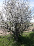 Flores del árbol foto de archivo libre de regalías