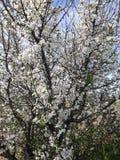 Flores del árbol foto de archivo