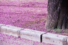 Flores del árbol de almendra Imagen de archivo libre de regalías