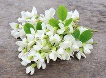 Flores del acacia fotos de archivo