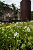 Flores del agua en la fábrica del ron foto de archivo